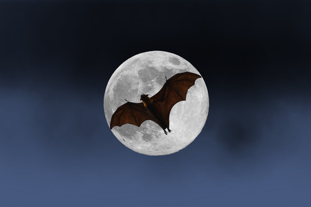 horrify: Bat silhouettes with full moon - Halloween festival