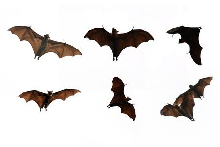 murcielago: Colecci�n Bat aislar sobre fondo blanco - el festival de Halloween