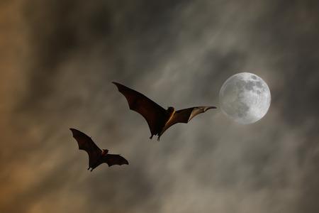 슈퍼 달 박쥐 실루엣 - 할로윈 축제