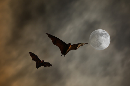 bat animal: Bat silhouettes with super moon - Halloween festival