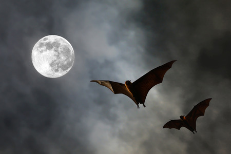 スーパー月 - ハロウィン祭りとバット シルエット 写真素材