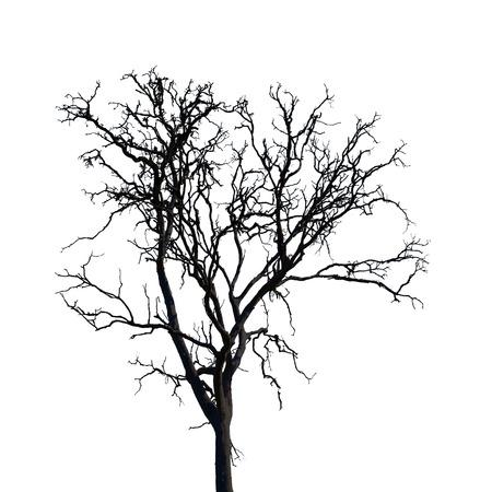 arboles secos: Aislado �rbol est�ril en el fondo blanco Foto de archivo