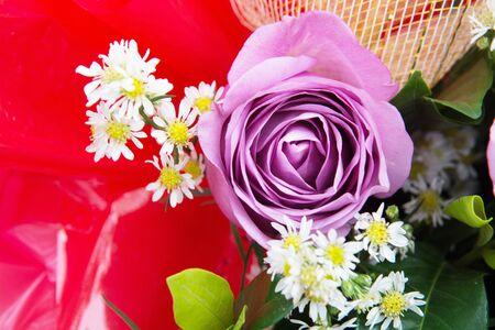 purple rose: purple rose Stock Photo