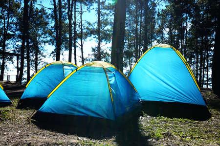 awaking: holiday camping under tree agent sun lighting
