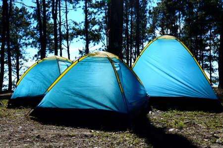 holiday lighting: holiday camping under tree agent sun lighting