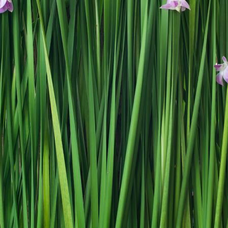 backdrop: green backdrop plant background