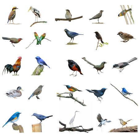 silver eared: Collection birds set