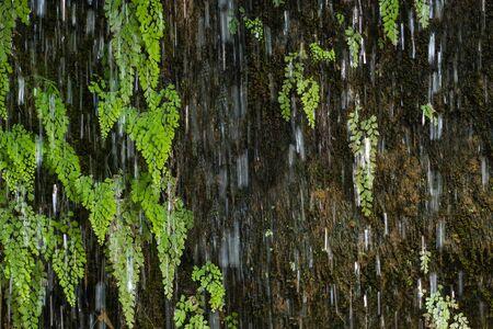 greeen: Fresh of green leave behind waterfall