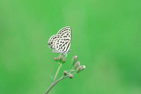 spotted flower: Butterfly and flower on green as background Stock Photo