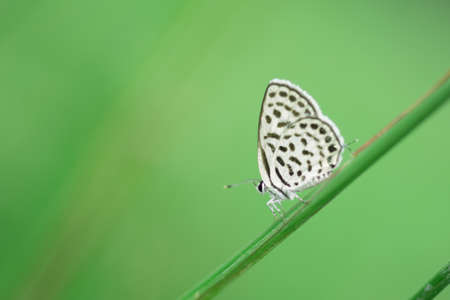 greem: Butterfly perching on greem leaves  as background Stock Photo