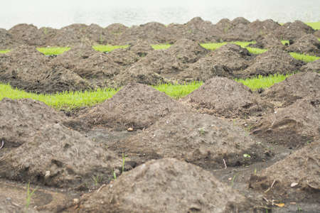 muck: manure in the countryside near river for agriculture background