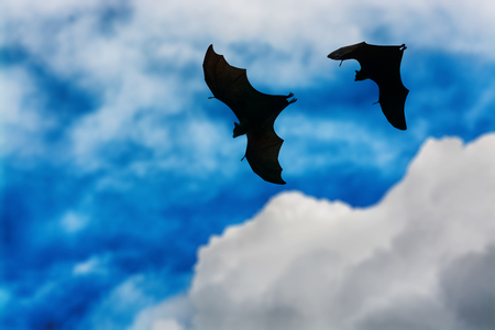 Bat silhouettes with colorful lighting - Halloween festival Stock Photo