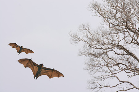 horrify: Bat silhouettes with colorful lighting - Halloween festival Stock Photo