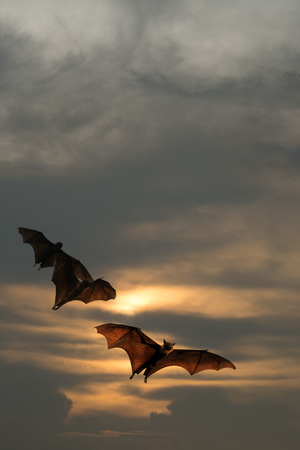 Bat silhouettes with sunset lighting - Halloween festival Stock Photo