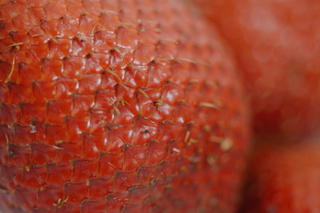 Skin of Salak snake fruit as background (focus at some area of fruit)