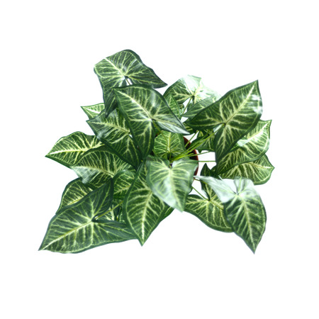 Syngonium podophyllum artificial flower bouquets isolate on white background