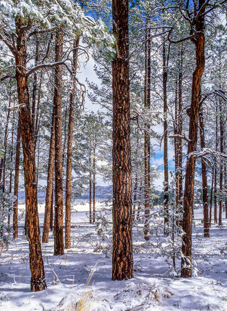 wilderness area: The Gila National Forest was established in 1924 as the first designated wilderness area in the lower 48 states by the US government and is therefore protected from deforestation. Stock Photo