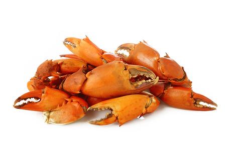 cangrejo: Hervido pinza de cangrejo en el fondo blanco