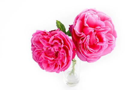 ガラスのピンクのバラ