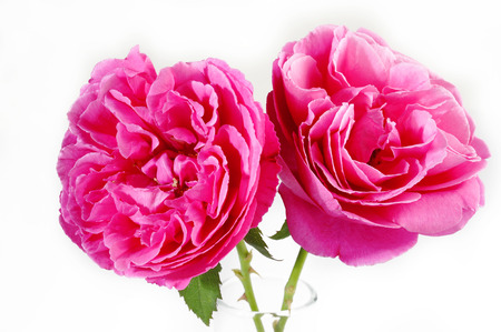 Pink roses Imagens - 31797272