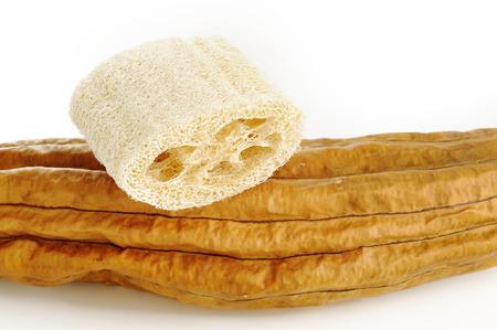 Natural loofah sponge photo
