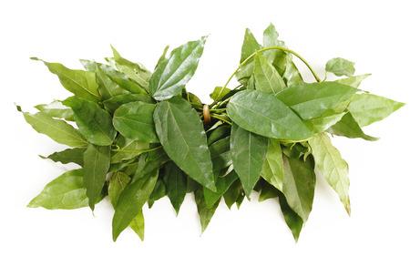 Bai-ya-nang,herb on white