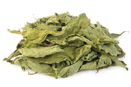 dried stevia on white background Фото со стока