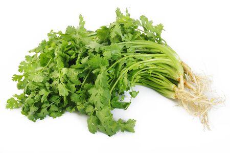 cilantro: cilantro sobre fondo blanco