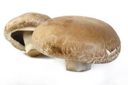 portobello: portobello mushroom on white background Stock Photo