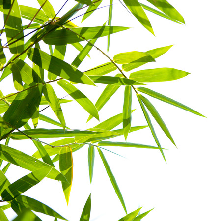 bamboo leaves isolated on a white background photo