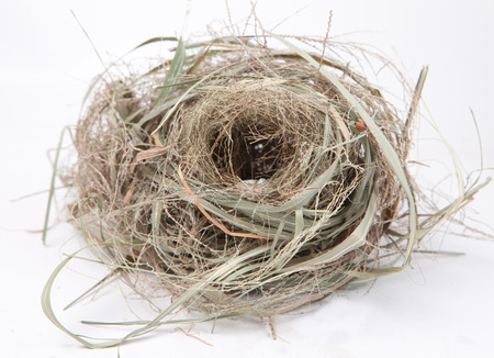 bird nest isolate on white background photo