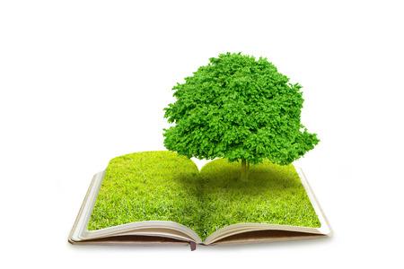 convivencia escolar: Libro abierto con el �rbol en campo de hierba verde