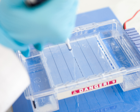 electrophoresis: loading PCR sample into a gel for electrophoresis Stock Photo