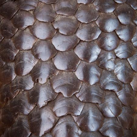 Pangolin skin