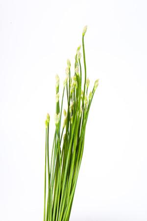 vietnamse: Garlic chives Stock Photo