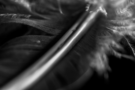 Black and white feather Stock Photo