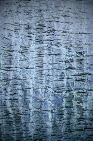 bark background texture: Olive tree bark background texture pattern blue color effect Stock Photo