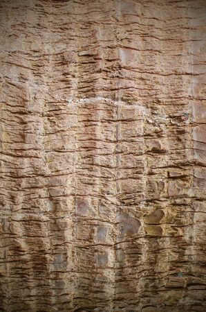 bark background texture: Olive tree bark background texture pattern Stock Photo
