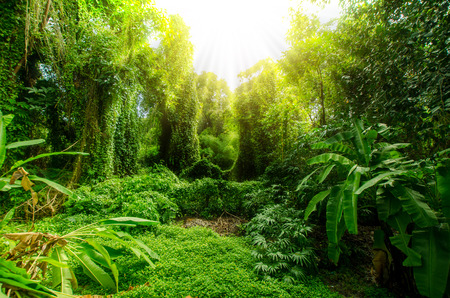 Tropical forest, thailand trees in sunlight and rain