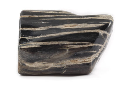 earthing: An ancient piece of petrified wood in black and white. The texture shows the structure of the tree. Stock Photo