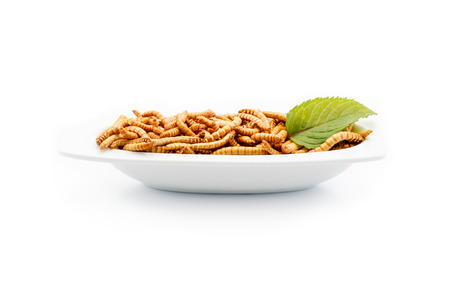 Mealworms on a plate with decoration. Healthy mealworms on white plate with decoration. Food of the future. Mealworms are healthy and tasty. Nowadays mainly used in asian kitchens and by enthusiasts in the western world. Stock Photo