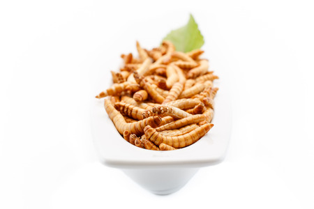 Mealworms close up with decoration.  photo
