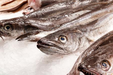 Fresh sea fish in ice on mercat de la boqueria Barcelona, Spain. Focus on head front fish. Stock Photo
