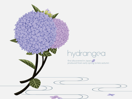 discovered: Elegant hydrangea on the water. Hydrangea is first discovered in Japan, symbolizes heartfelt emotions.