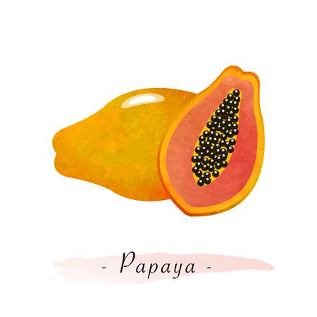 Colorful watercolor texture vector healthy fruit ripe papaya