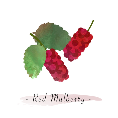 Colorful watercolor texture vector healthy fruit red mulberry Çizim