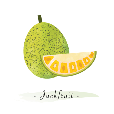 Colorful watercolor texture vector healthy fruit jackfruit
