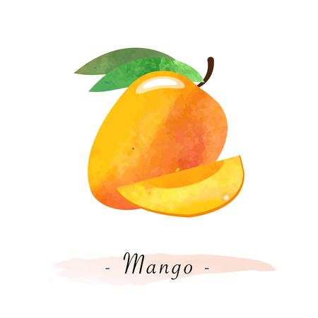 Colorful watercolor texture vector healthy fruit mango