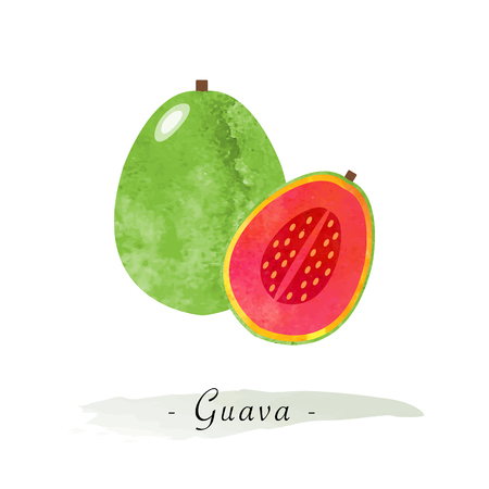 Colorful watercolor texture vector healthy fruit guava