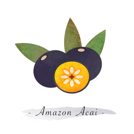 Colorful watercolor texture vector healthy fruit amazon acai Illustration
